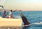 海豹趴船尾索要食物