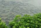 南昌大学暴雨好多鱼