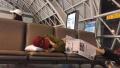 张天爱飞机延误睡机场 暖心劝告粉丝早点睡觉