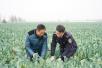"""农业标准化改革的""""试验田""""——首批国家现代农业产业园背后的探索"""