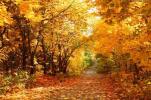 气温稳定在22℃以下时才算进入秋季 山东9月入秋
