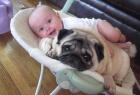 狗狗是宝宝的好朋友