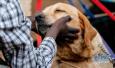 """济南宠物斗士:一只京巴寄养两年 宠物人的""""春劫"""""""