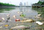重磅!江苏6部门联手整治长江流域污染环境违法犯罪