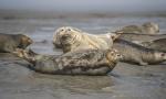 斑海豹洄游栖息