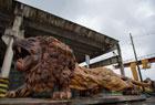 废工厂藏楠木狮子王
