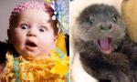 宝宝和小动物神同步
