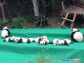 熊猫天团庆祖国生日