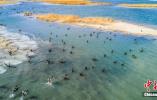 中国最大盐湖颜值超高 吸引众多珍稀鸟类来过冬