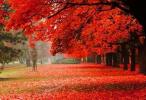 又是一年枫叶红!河南最全赏红叶地图送给你