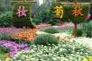 秋日的郑州人民公园:经过了?#21512;摹?#33738;花怒放