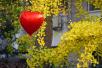 北京深秋赏叶醉游人 留住最美的黄叶