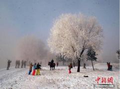 松花江畔现大范围雾凇 玉树琼枝引大量游客