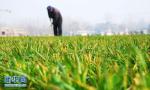 到2020年临沂将建成省级农业标准化生产基地80处