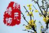 第七届中国·鄢陵蜡梅梅花文化节2018年1月开幕