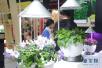植物冬季养护知多少? 控制好三个因素让植物轻松越冬