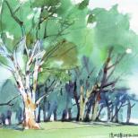 澳洲桉树林