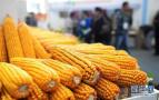 黑龙江补贴政策:新产玉米每吨补150元大豆补300元