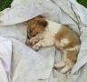 17只猫狗被毒杀