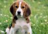 如何保护好狗狗的脚垫,饮食对狗狗牙齿的影响