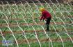 淄博:农业生产个人最高补贴100万元