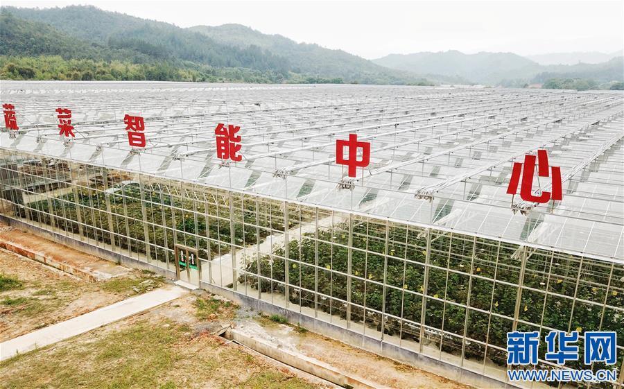 这是江西全南县江禾田园蔬菜智能中心(4月25日摄)。