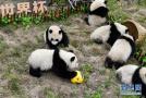 "熊猫""足球赛"""