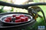 """吹空调、吃水果、有冰块,来看济南动物园的""""花式降温"""""""