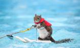 美国滑水松鼠将退休