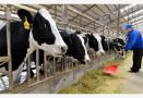减少畜禽污染,江苏又出新招,2020年规模养殖场治理率要达90%