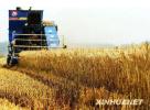 中国农大首个农业绿色发展示范区在曲周启动