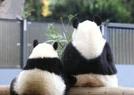 旅日母女大熊猫背影