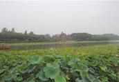 河南:农村坑塘变成大花园和聚宝盆