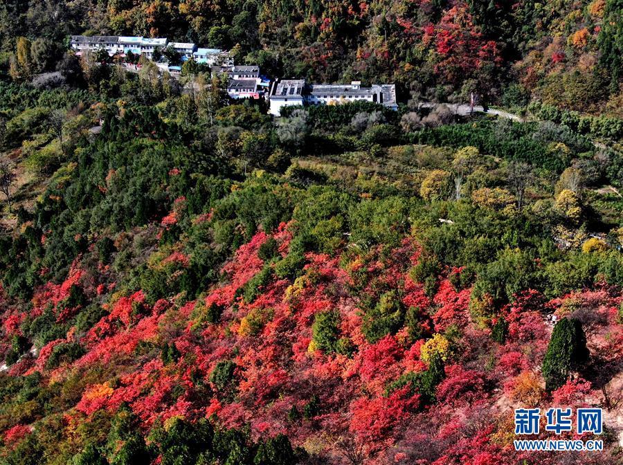 (环境)(5)红叶漫山秋意浓