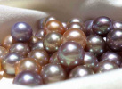 小珍珠 大世界