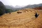 普兰店连续多日无有效降雨 30多万亩在田作物遭遇旱情