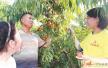 徐州大学生村官刘晓翠指导农民科学种植油桃