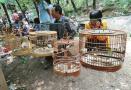 济南英雄山数百只野生鸟被当街售卖 不乏保护品种