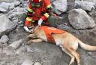 搜救犬小虎累瘫了