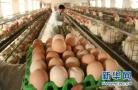 """韩检出本地产""""受污染鸡蛋"""" 三大超市暂停销售鸡蛋"""
