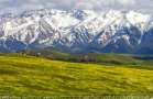 那拉提草原雪后风光