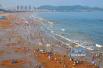 青岛金沙滩银沙滩浴场今日开放 全市9处海水浴场已开放8处
