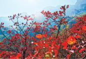 深秋的林州 红叶尽染美爆了