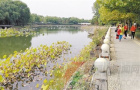 白龟湖湿地公园荷叶变色 散发出浓浓的秋意