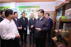 Xi Jinping makes inspection tour in Qingyuan, Guangdong