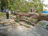 郑州热力管道爆裂 法桐树倒下砸伤一过路老者