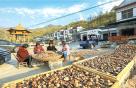 河南西峡:小小香菇飘香 乡村振兴路