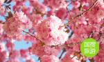 春节假日,山东各地景点推出研学游活动欢度新年
