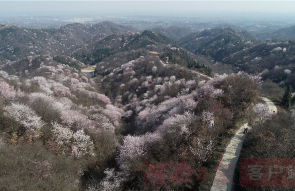 河南光山:樱花盛开醉游人
