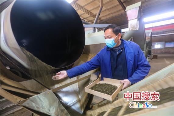 河南光山:茶叶出口创汇生产忙